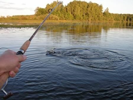 Как выбрать рыболовную катушку