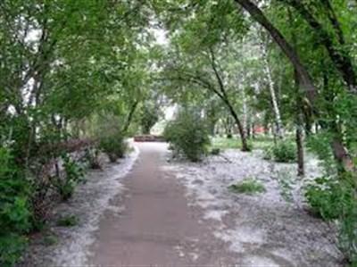 В следующем году в Славянске снесут 113 тополей