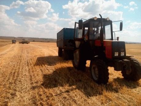 Стали известны лидеры уборочной кампании по урожайности и темпам работ в Славянском районе