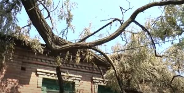 Коммунальщики Славянска проигнорировали упавшее на электросети дерево