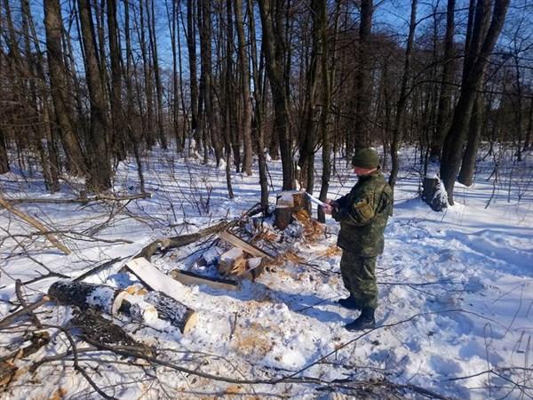В Святогорье задержан житель, занимавшийся незаконной вырубкой леса