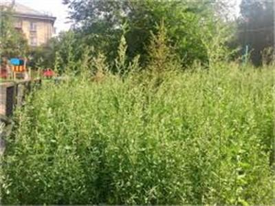 Жители Славянска просят покосить в городе траву и отремонтировать общежитие