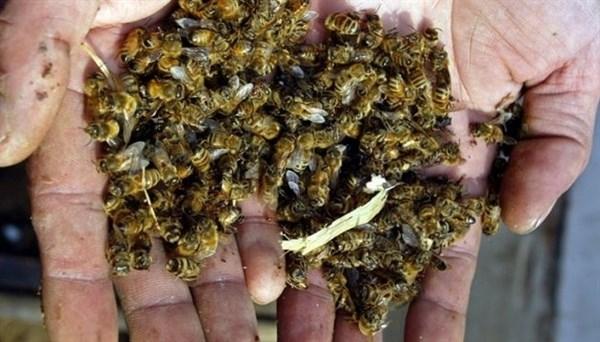 В районе села Ореховатка идет массовое вымирание пчел. Что случилось?
