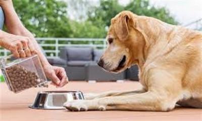 Купить корм для собак: на что обратить внимание перед покупкой