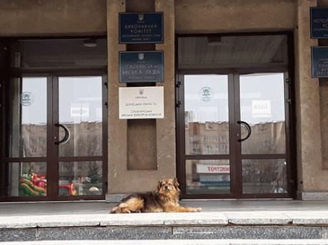 Умерщвление бездомных собак в Славянске: петиция набрала 250 голосов, но власти города не будут ее выполнять