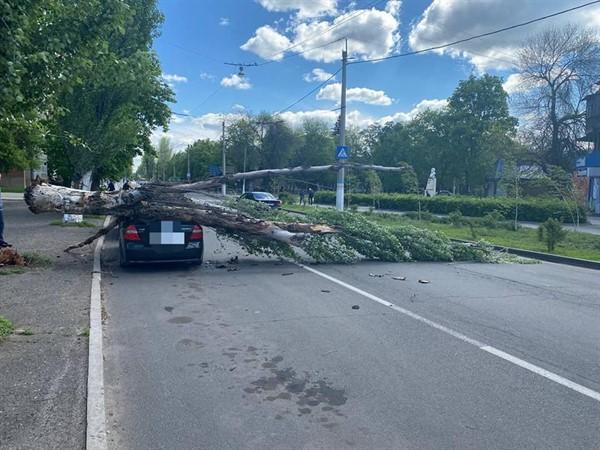 В Славянске старый тополь придавил автомобиль