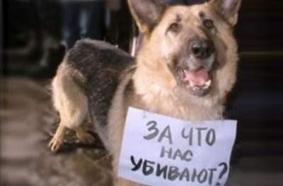 Житель Славянска привязал собаку к машине и на скорости тащил ее по улицам