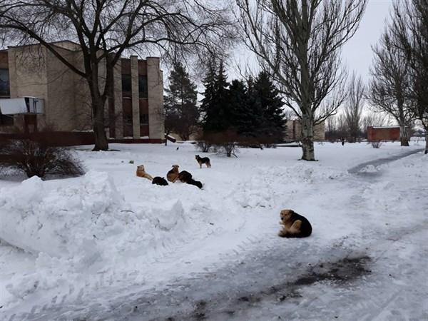 Горожанам советуют воздержаться от прогулок по Славянскому курорту: много бродячих собак (ФОТОФАКТ)