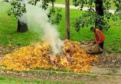 Власти Славянска просят собирать опавшую листву в мешки и оставлять их  у дороги