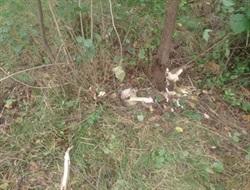 В Славянске во время уборки в одном из скверов был найден человеческий череп