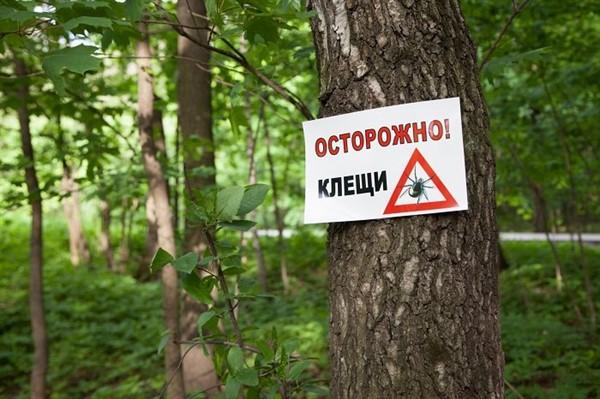 От укусов клещей пострадали уже 11 жителей Славянска