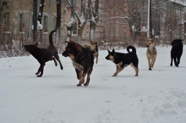 Цифра дня. Стало известно, сколько жителей Славянка за неделю покусали бродячие собаки