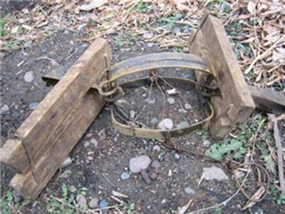 В лесополосе за Семеновкой браконьеры устроили охоту на дикого кабана