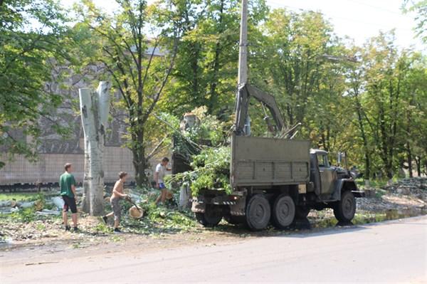 В Славянске не хватает специалистов, которые умеют ухаживать за деревьями
