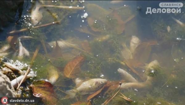 На озере в центре Славянска гибнет рыба