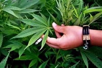 Жителей Славянска расспросили, как они относятся к легализации марихуаны