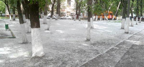 В Славянске появилась петиция о необходимости вырубки всех тополей