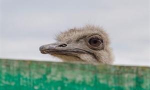 Велопробег к гости к африканским страусам в Ямполь Лиманского района